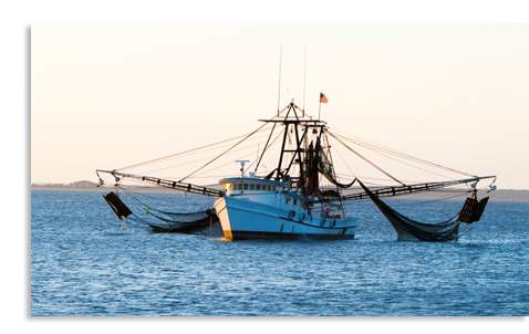 Wild Shrimp Fishing Boat